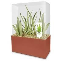 Grow Your Own Aloe Plant